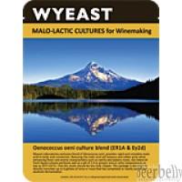 Wyeast 5335 Lactobacillus